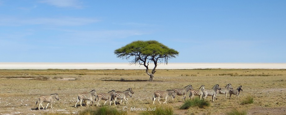 Zebras in der Etoscha-Pfanne