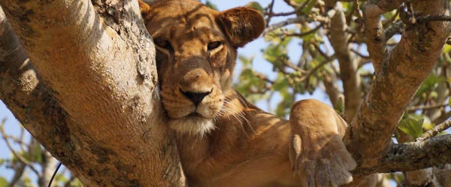 Rundreise Weihnachten 2019.Namibia Rundreisen 2019 Reise Angebote Tipps Vom Namibia Spezialisten