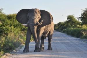Etosha-Besuch auf der Schlagerreise Namibia