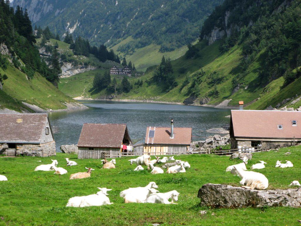 Blick über die Fählenalp auf den Fählensee im Alpstein