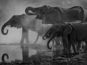 Etosha: Elefanten am Wasserloch