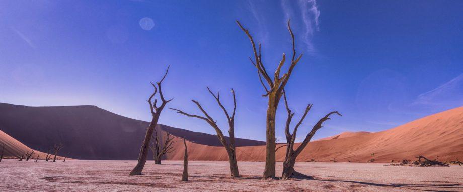 von der Sonne versengte alte Kameldorn-Akazien mitten in den Sanddünen der Namib-Wüste im Deadvlei